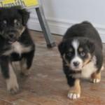 Blue et Rosie bébés