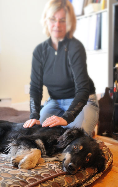 Massothérapie canine